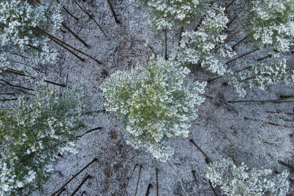 Trotz der derzeit für Borkenkäfer ungünstigen Witterung bleibt die Lage in Sachsens Wäldern angespannt.