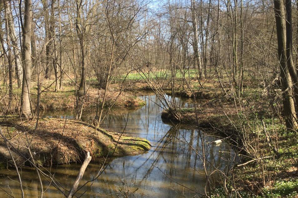 Die Malschwitzer Kleine Spree fließt durch die Teichlandschaft.