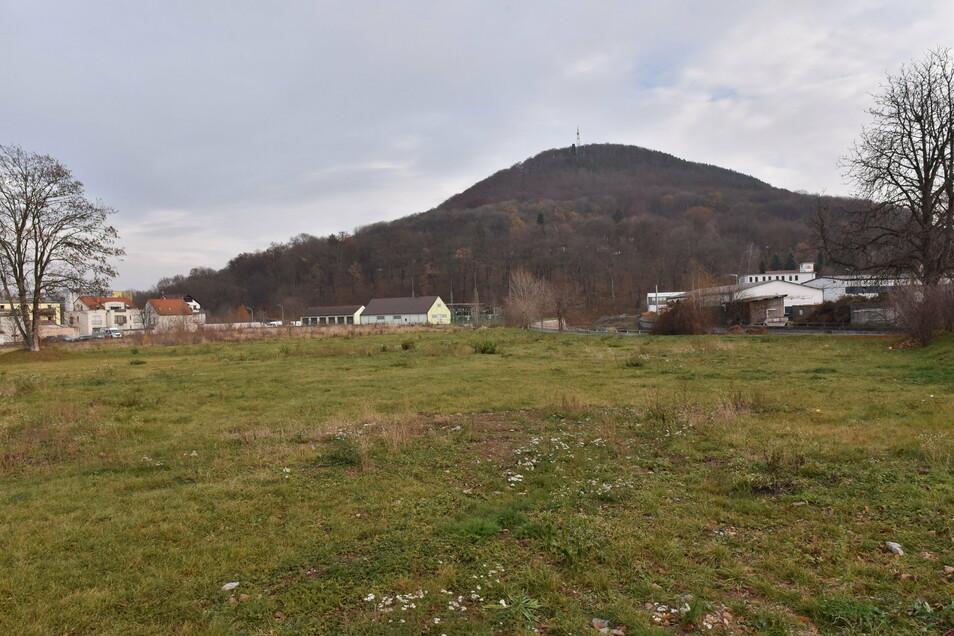 Auf dieser Brache am Fuße des Windbergs soll einmal Freitals neues Zentrum entstehen.