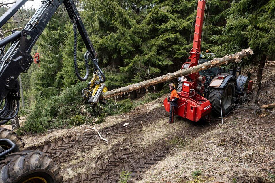 Begehrter Rohstoff: Arbeiter der Firma Thomas Behrisch aus Karsdorf ernten mit ihrem Seilkran Holz im Revier Rehefeld.