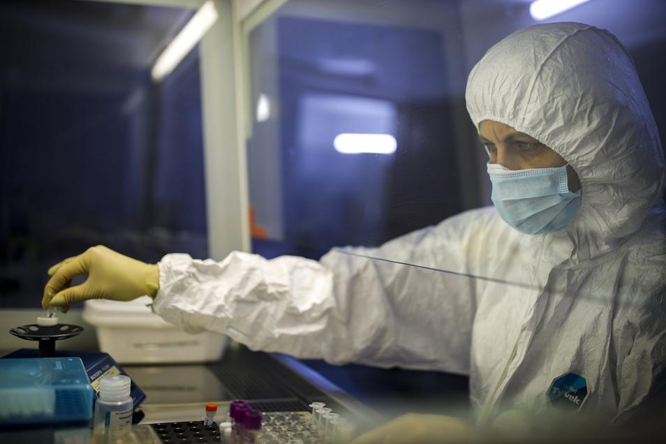 Ein medizinischer Mitarbeiter arbeitet mit einem Testsystem für die Diagnose vom Coronavirus in einem mikrobiologischem Labor.