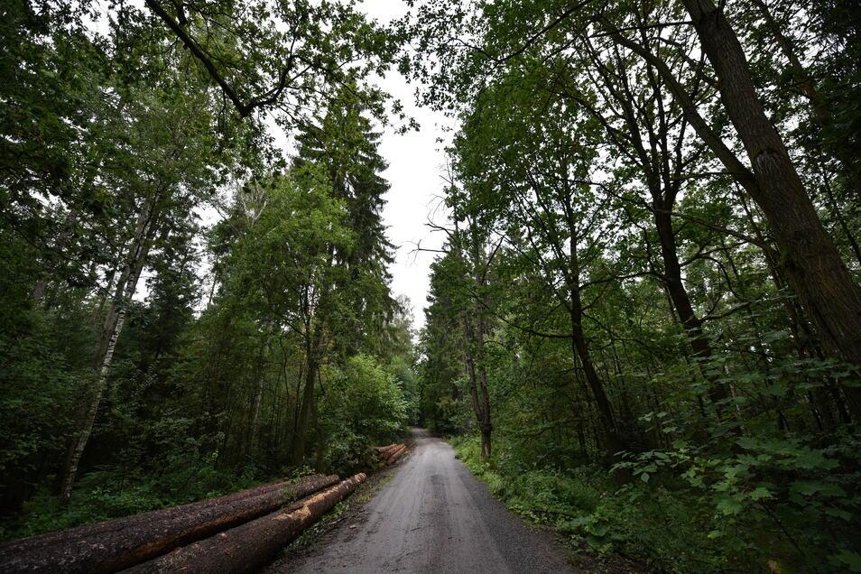 In Loschwitz ist ein Kind von einem Unbekannten angesprochen worden. Der Mann wollte, dass der Junge ihm in den Wald folgt.