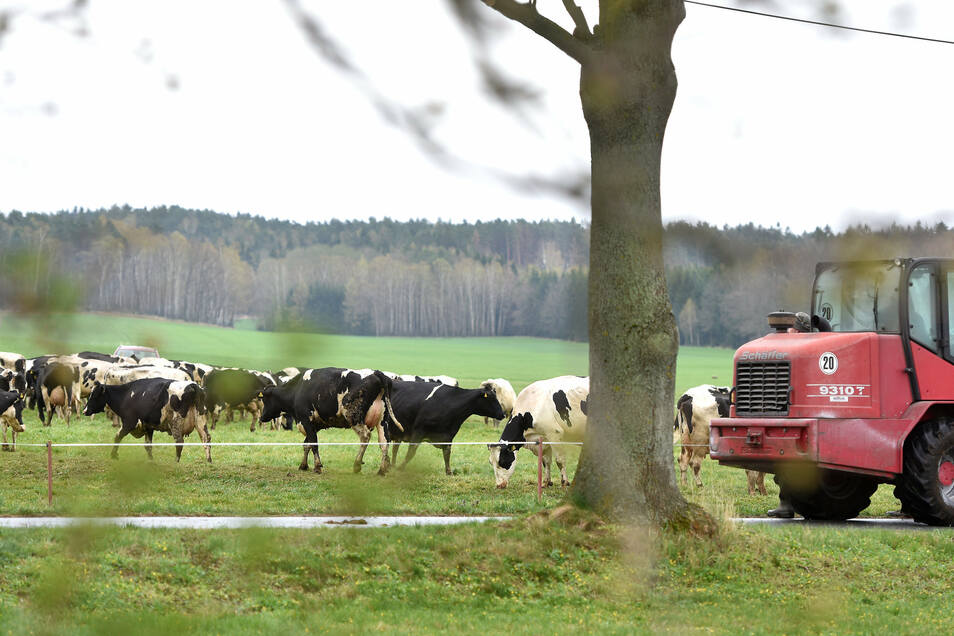 Die 65 Milchkühe blieben glücklicherweise unverletzt. Sie unterzubringen und zu versorgen, war die dringendste Aufgabe für den Landwirt.