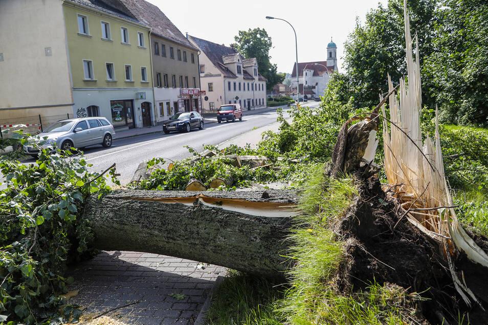 So wie hier in der Friedensstraße brach der Gewittersturm am Pfingstmontag in Zittau selbst dicke Stämme.