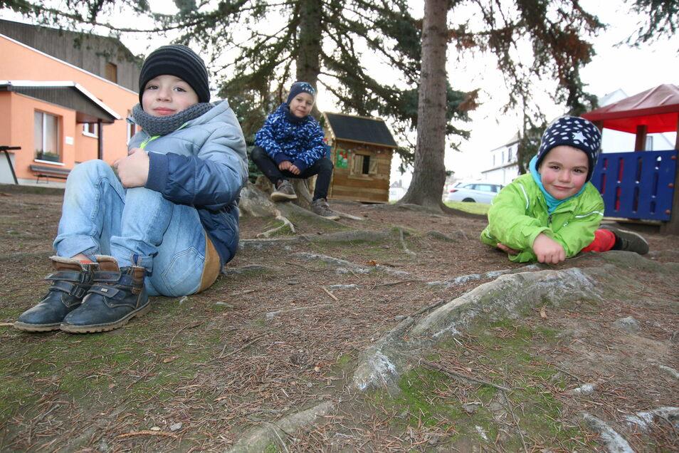 """Timo, Kurt und Benedict zeigen die Wurzeln der Nadelbäume, die im Lauf der Jahre zu Stolperfallen geworden sind. Der Außenbereich der Kita """"Burggeister"""" in Kriebethal soll im nächsten Jahr umgestaltet werden."""