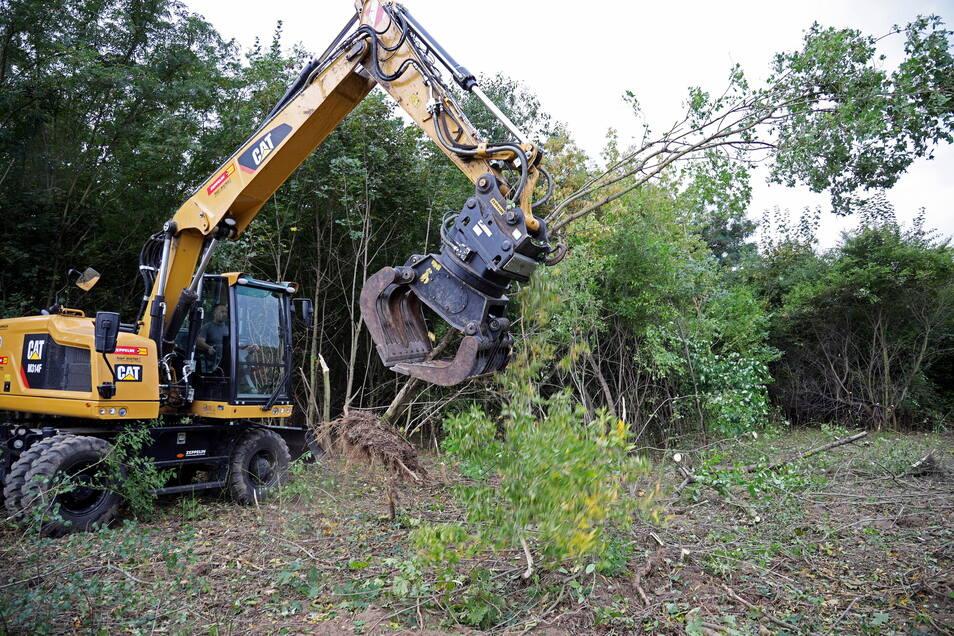 Ein Bagger zieht die kleineren Bäume samt Wurzel heraus.