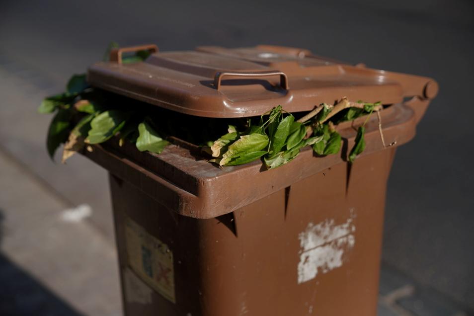 Was in die Biotonne darf, ist geregelt – Größe, Umfang, Durchmesser oder Gewicht des Abfalls aber nicht.