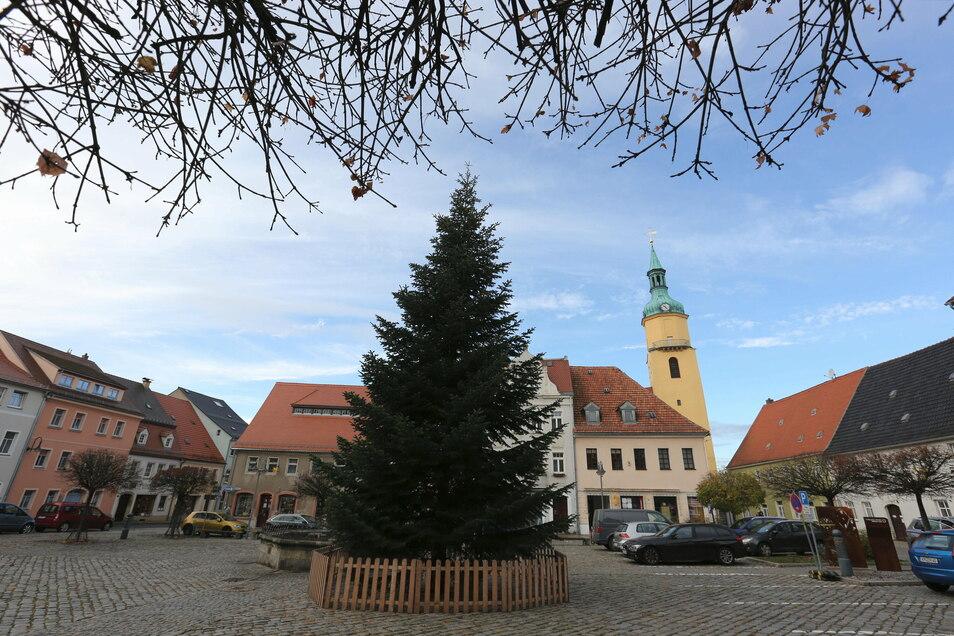 Ein 13 Meter hoher Weihnachtsbaum schmückt jetzt den Pulsnitzer Markt. Auch in anderen Städten der Region wird weihnachtlich geschmückt. Feste und Märkte fallen allerdings aus.