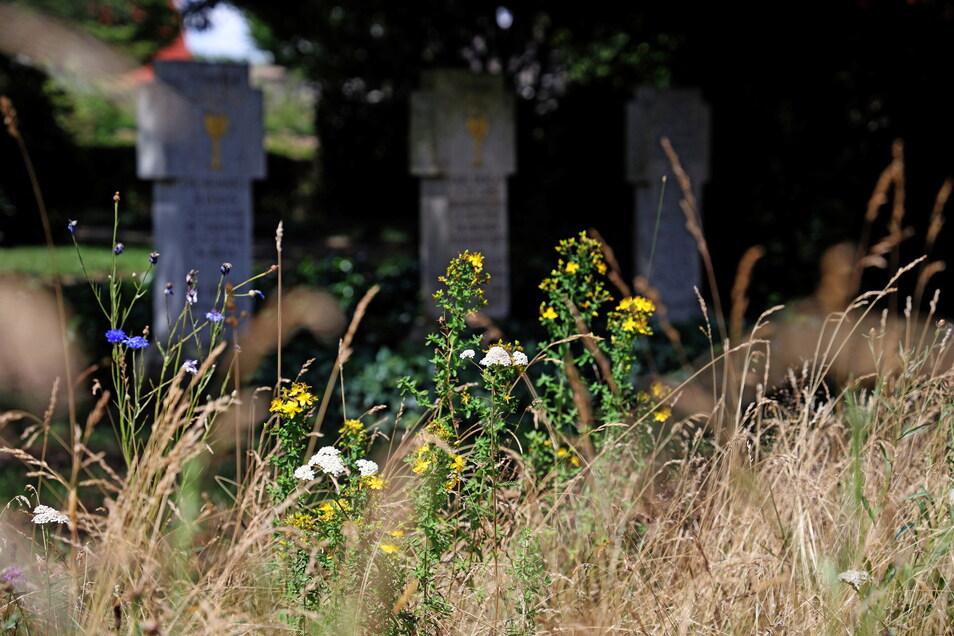 Flächen, die momentan nicht für Bestattungen benötigt wird, bewirtschaftet die Friedhofsverwaltung extensiv. Über die Wildblüten freut sich vor allem die Insektenwelt.