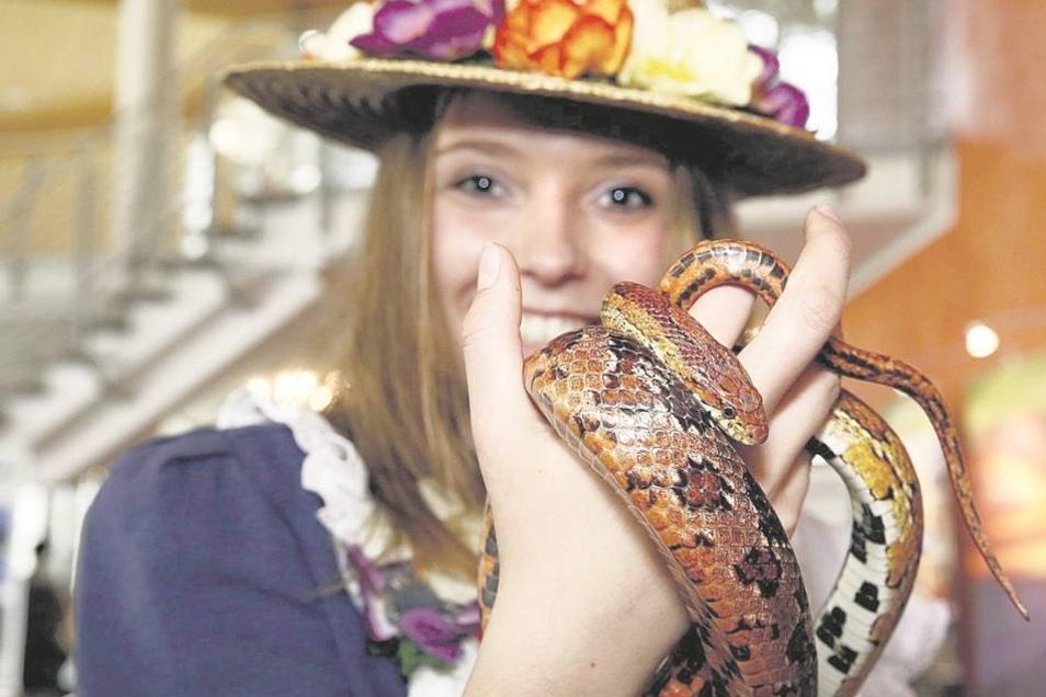 Ohne Scheu: Das Sebnitzer Blumenmädchen Emily Richter begeistert sich für eine Kornnatter. Bei der Tourismusbörse in der Toskana-Therme Bad Schandau am vergangenen Wochenende hatte sie einen ihrer letzten großen Auftritte. Heute Abend wird sie das Zepter