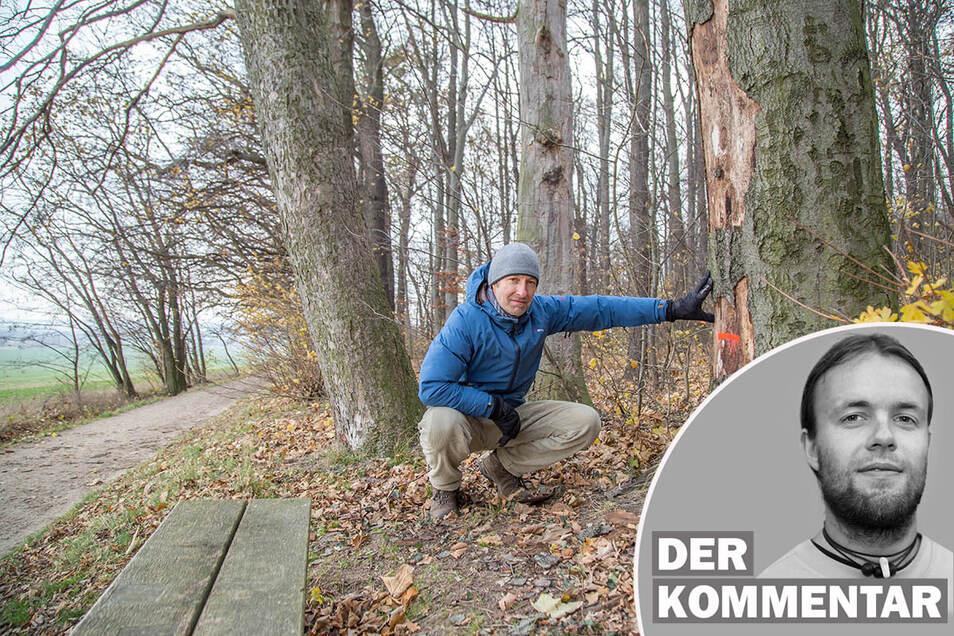 SZ-Redakteur Ingo Kramer kommentiert das Baumfällen an der Landeskrone.