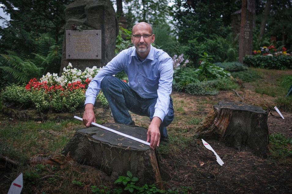 Seit 2005 ist Jens Börner Fachbereichsleiter des Urnenhains. Damals waren die Kiefern noch dicht und kräftig, sagt er. Nun muss er viele Bäume fällen lassen, denn sie werden zur Gefahr für Besucher.