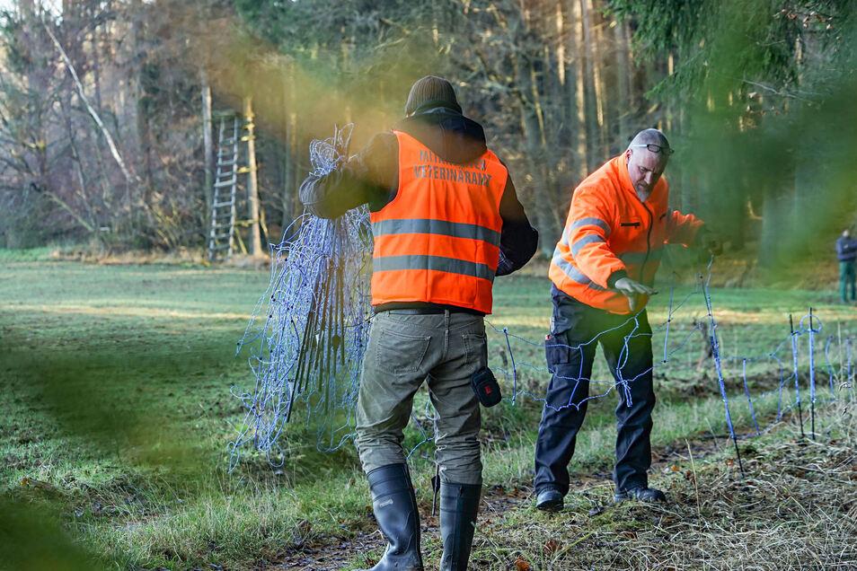 Mittlerweile bitterer Ernst: Mitarbeiter des Veterinäramtes des Landkreises Bautzen bauen im Dezember 2019 in Schirgiswalde im Rahmen einer Tierseuchenübung einen Elektrozaun auf.