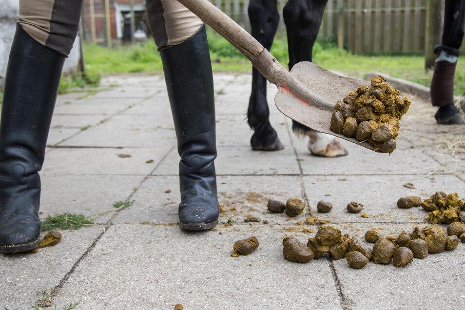 Stallmist lässt sich gut als Dünger verwenden - im Garten aber nur in Maßen, raten Pflanzenexperten.