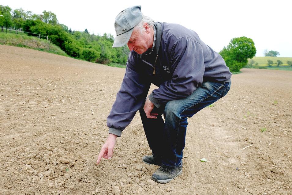 Landwirt Herbert Bier kann es kaum fassen: Überall auf seinem Feld haben Wildschweine gewütet.