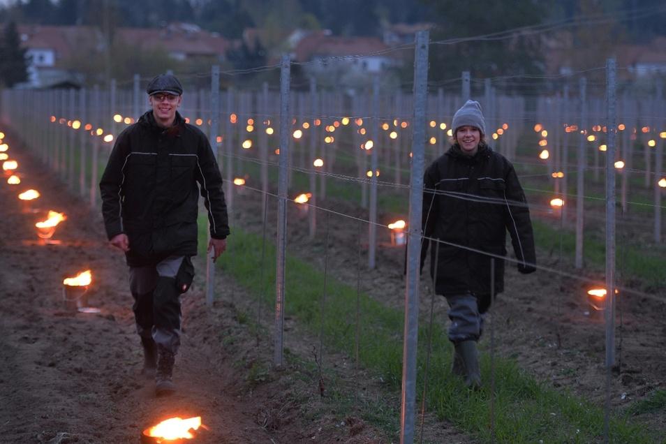 Auf Feuer-Patrouille: Die Winzer-Azubis Clara Burdzik (r.) und Jonas Lassak kontrollieren Donnerstagfrüh die Feuer auf dem Weinberg von Schloss Wackerbarth an der Köhlerstraße in Weinböhla.