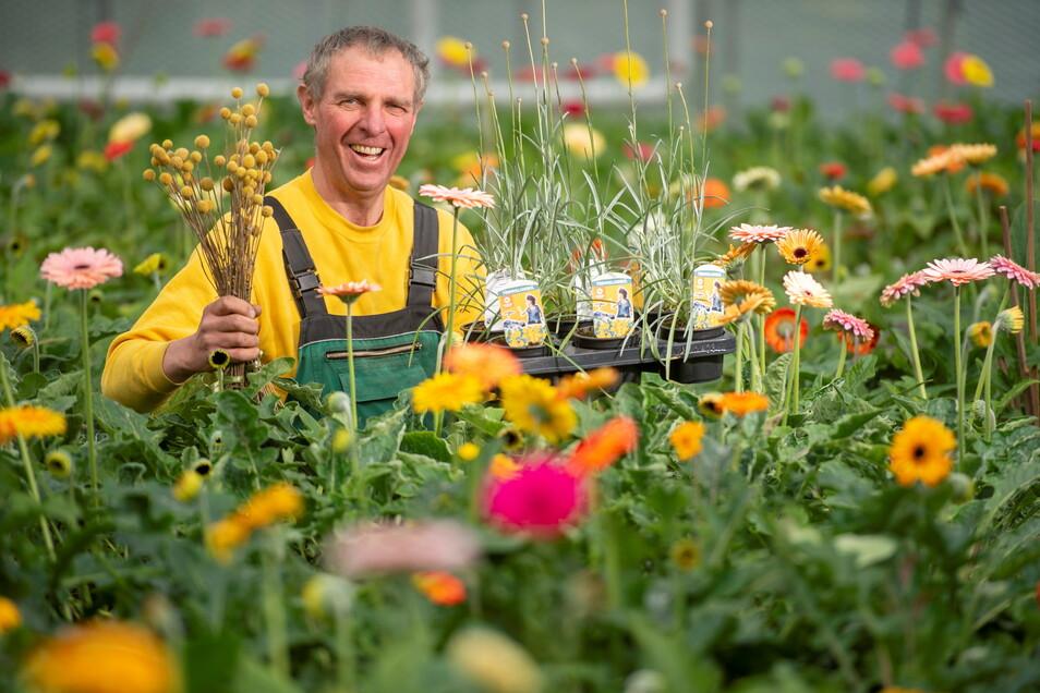 Gärtnermeister Michael Habelt mit der Pflanze des Jahres 2021. Die Trommelwirbel sind auch in Radeburg beliebt.