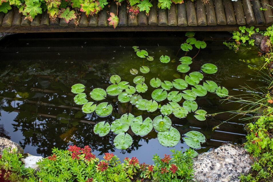 Den kleinen Teich ohne Fische legte Pratap schon vor der Wende an.