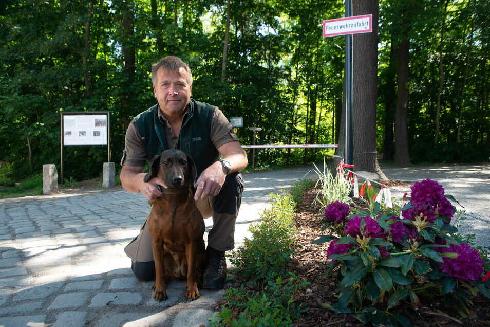 Thomas Stelzig ist Bühlauer Revierförster und der Vorsitzende des Verschönerungsvereins Weißer Hirsch.