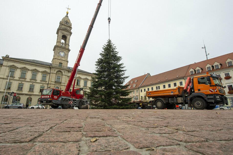 Seit Mittwochmittag steht er in voller Pracht auf dem Großenhainer Hauptmarkt: der 14 Meter hohe Mittelbaum zum Weihnachtsfest.