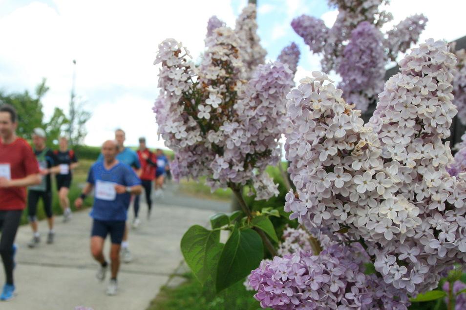 Bilder wie dieses gibt es 2021 beim Kamenzer Blütenlauf nicht zu sehen. Die Teilnehmer absolvieren die Strecken individuell. Viele haben haben das schon getan.