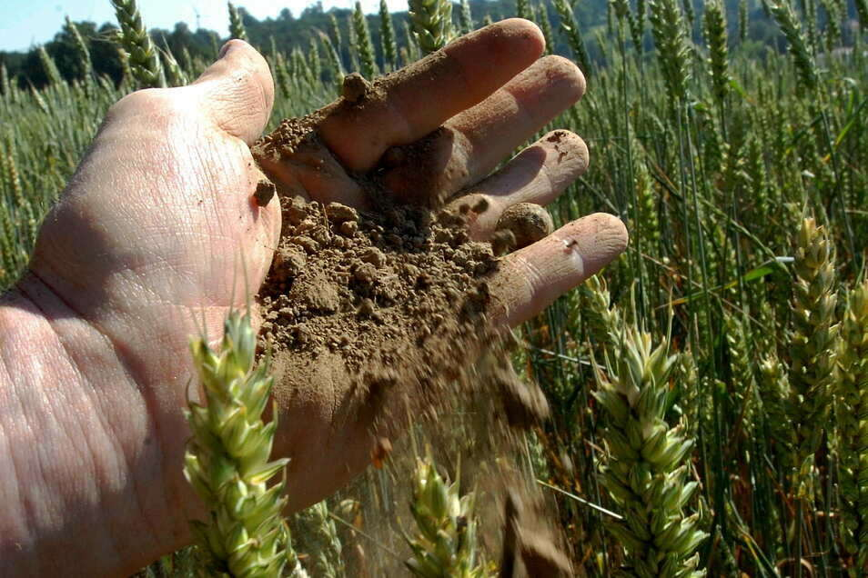 Staubtrocken ist der Ackerboden in den vergangenen drei Jahren oft durch die Finger der Landwirte gerieselt. Weil sich das auch wieder ändern kann, sehen sie noch keinen Grund zur Panik.