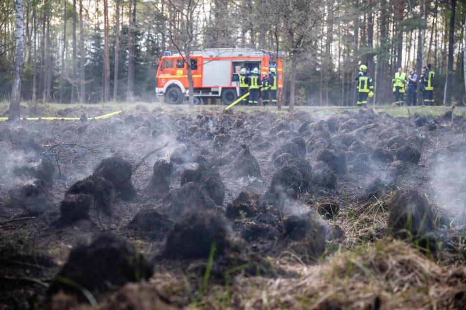 Einen Brand im Dubringer Moor bei Wittichenau mussten Feuerwehrleute am Donnerstagabend löschen.