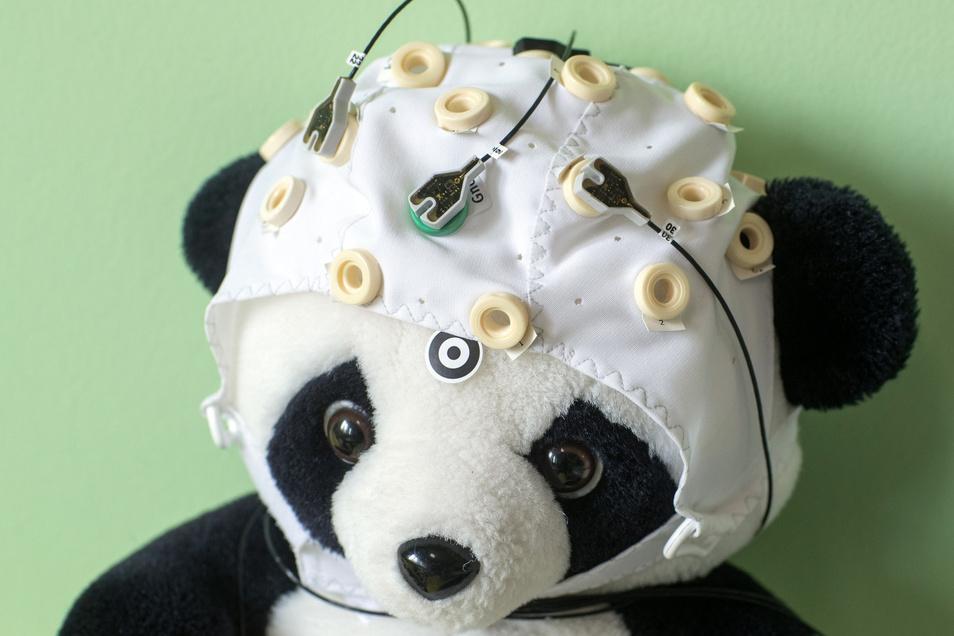 Ein Plüschtier mit einer Haube mit Elektroden dient als Anschauungsmaterial im Labor für Neurobiologie am Leibniz-Institut.