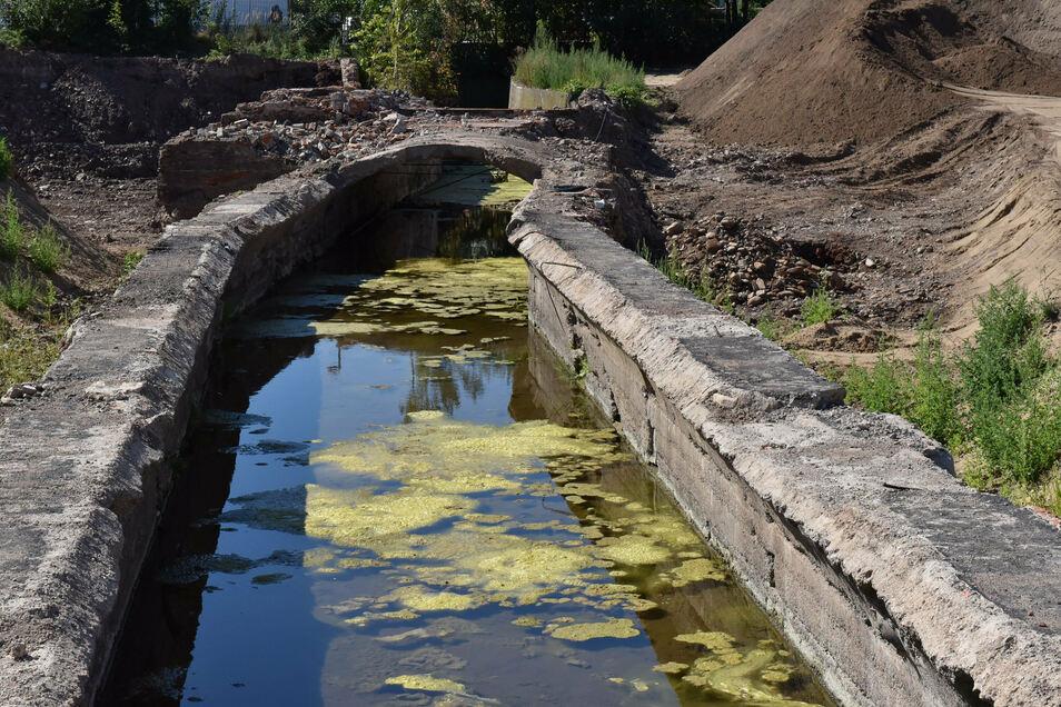 Jahrzehntelang verborgen, nun wieder sichtbar: der Mühlgraben. Viel Sonne lässt in dem stehenden Gewässer Algen wachsen.