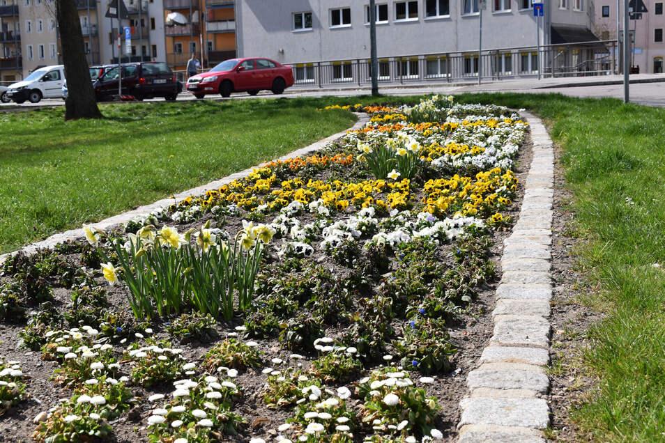 Auch die Blumenrabatte am Platz der Jugend in Freital ist wieder schön bunt.
