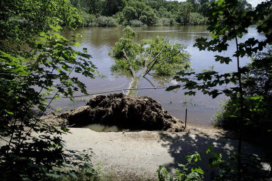 Ende Juni gab es ein Hochwasser an der Görlitzer Neiße. Mehrere Bäume konnten den Wassermassen nicht mehr standhalten.