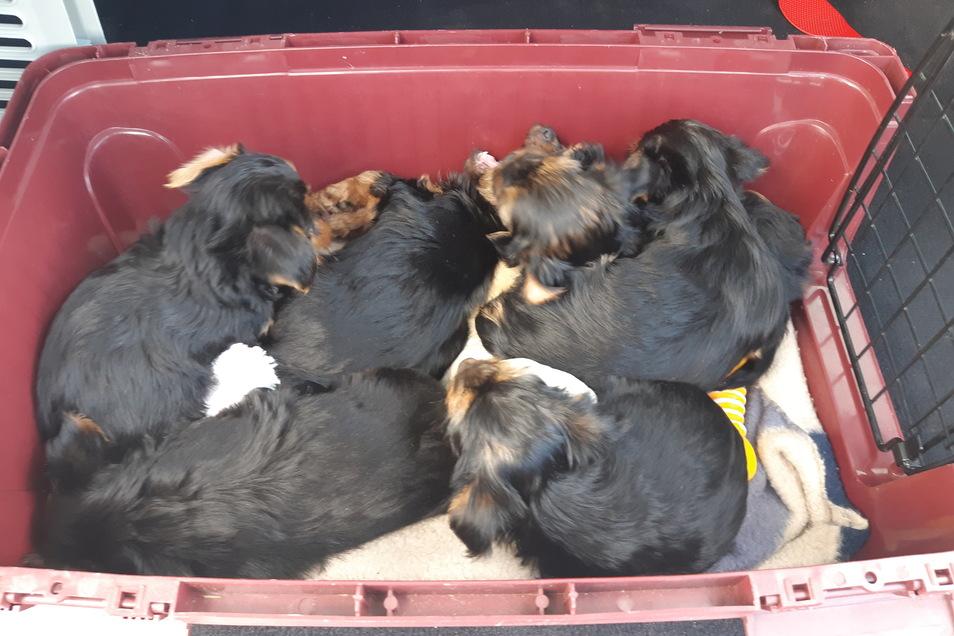 Die Hundewelpen waren weder mit Wasser noch mit Futter versorgt.