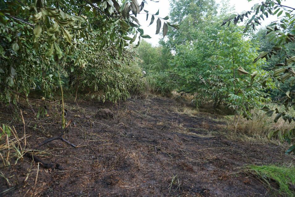 Auf rund 100 Quadratmetern verbrannten Gras und Sträucher.