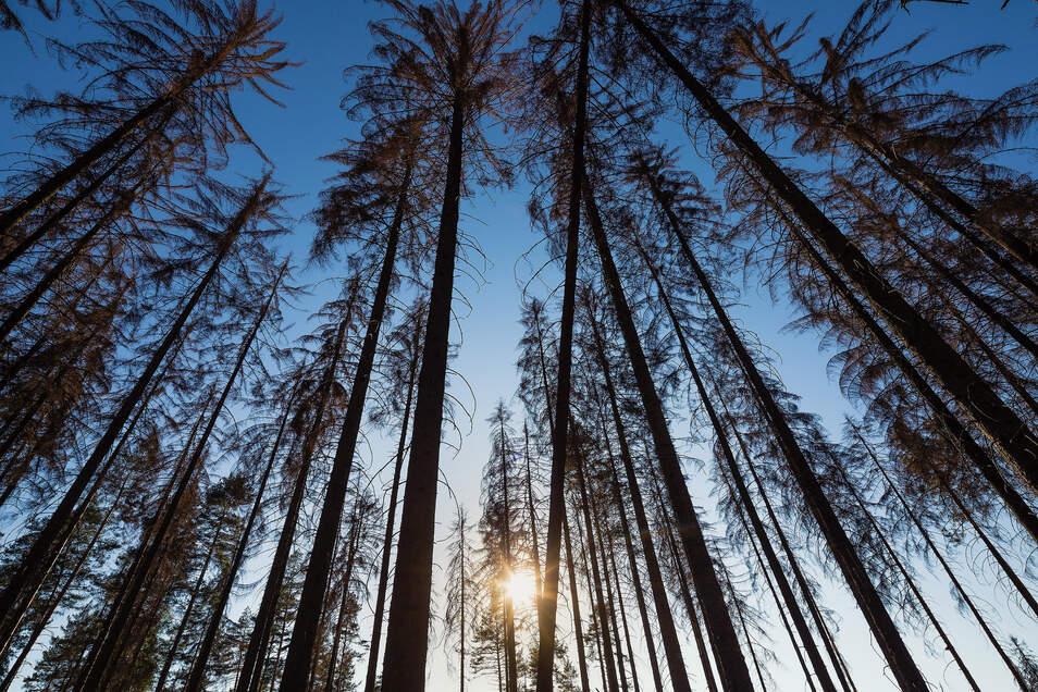Käfer, Stürme und die Trockenheit bedrohen den Wald.