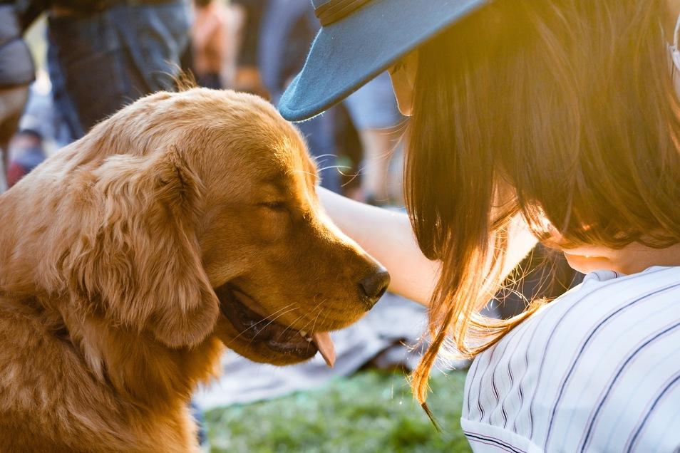 Mensch und Hund - Es ist eine Freundschaft, die nahezu unzertrennbar ist.