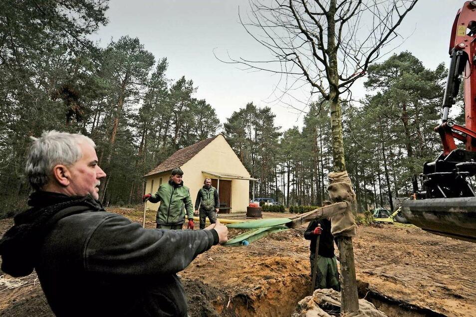 Dirk Noack, Henri Hänchen (vorn) und Helfer setzten die große Platane auf dem Friedhof in Haide. Momentan ruhen die Gestaltungsarbeiten bis zum neuen Jahr.