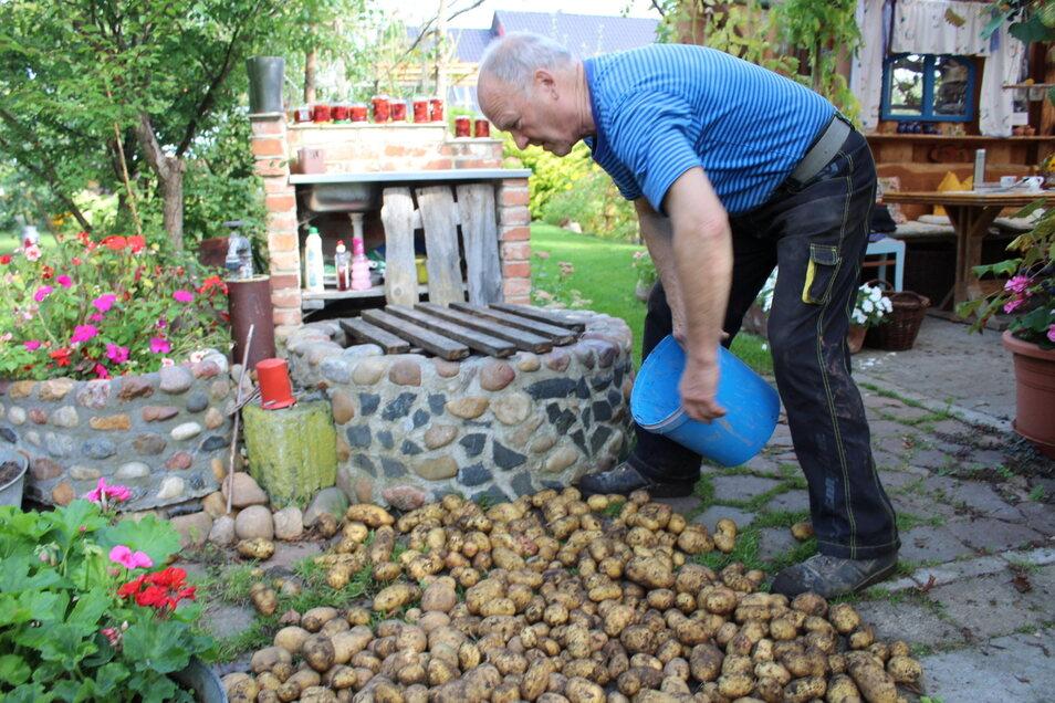 Siegfried Posselt breitet die frisch gelesenen Kartoffeln zum Trocknen aus.