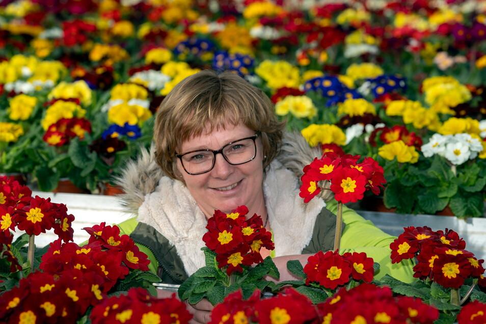 Antje May, die Chefin der Traditionsgärtnerei Gruschwitz in Langburkersdorf, stellt die Pflanze des Jahres 2021 in der MDR-Gartensendung vor.