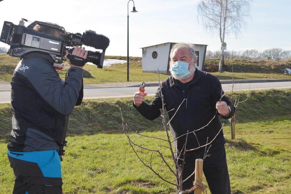 Wilfried Fuhrmann zeigt wie es geht: Den Schnitt der Apfelbäume fängt die Fernsehkamera ein.