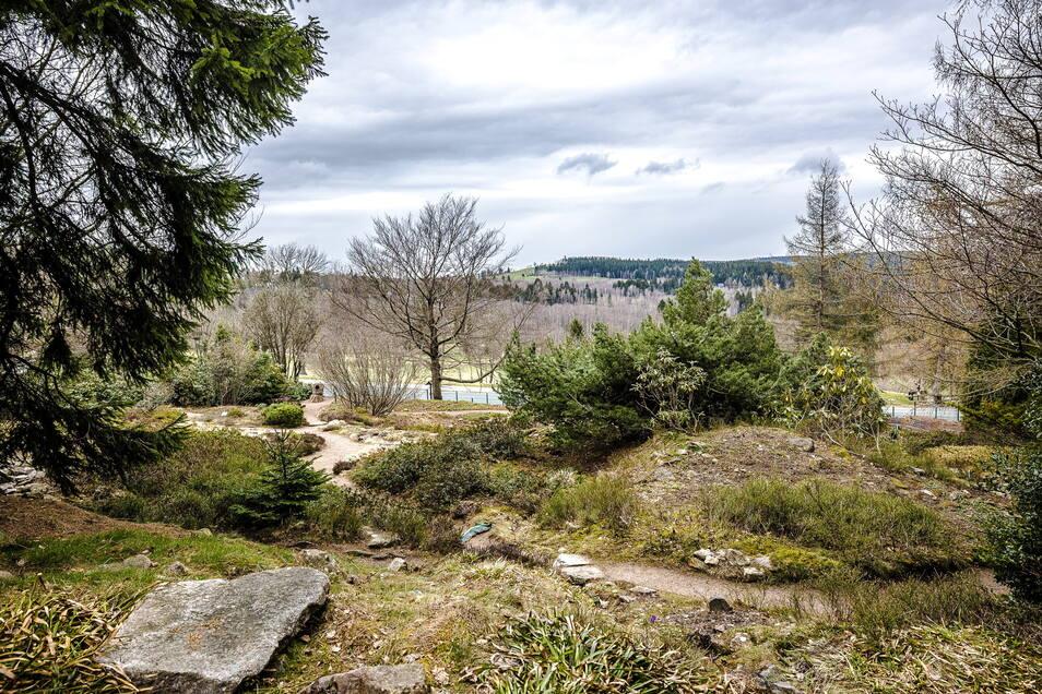 Der Bärlapp hat beste Wachstumsbedingungen auf kargen Böden. Nach dem sonnigen Wochenende weist der schöne Blick über den Schellerhauer Botanischen Garten und das Osterzgebirge sicher in blühende Landschaften.
