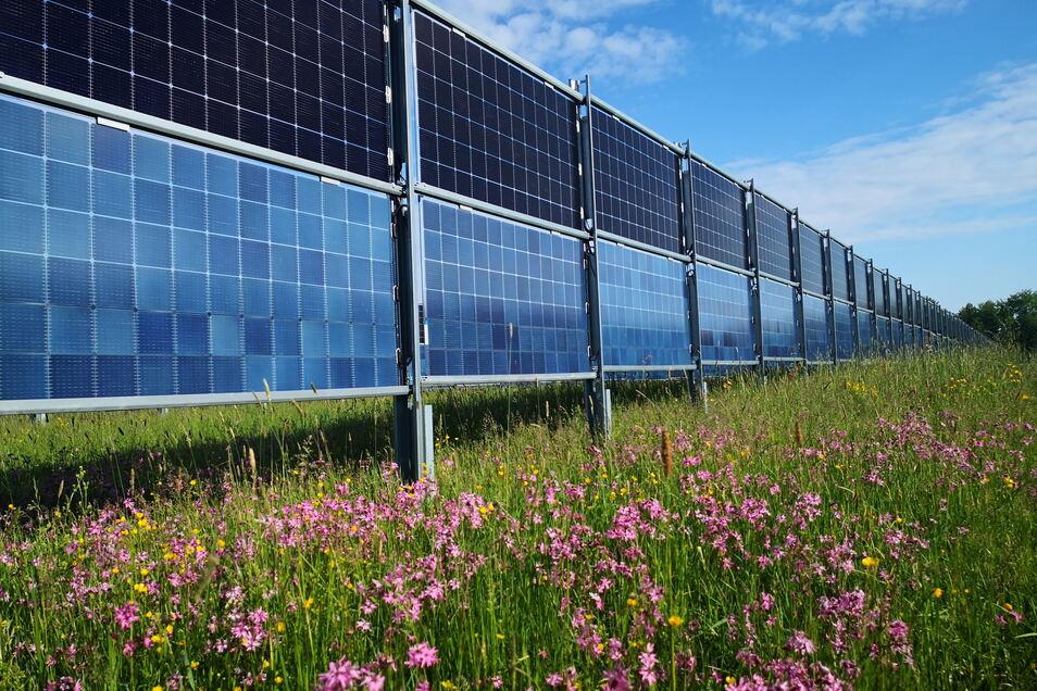 Energiegewinnen im Einklang mit der Natur. Das lassen die senkrecht stehenden Glasmodule zu.