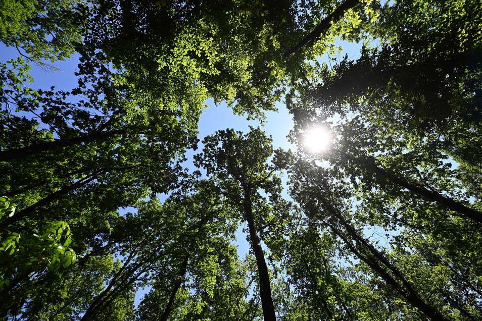 Das Bedürfnis nach Erholung in der Natur steigt.