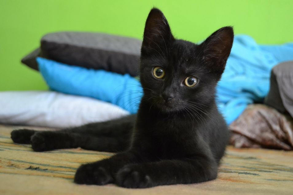 Schwarze Tiere haben im Tierheim oft Probleme ein neues Zuhause zu finden.
