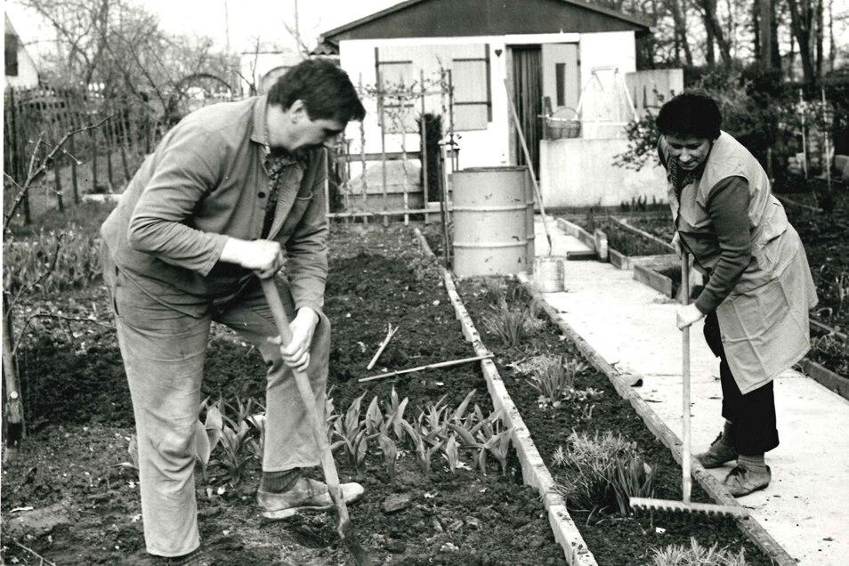 Gärtnern im Reiter - eine Aufnahme etwa von 1980 aus dem Bestand des Stadtmuseums Riesa.