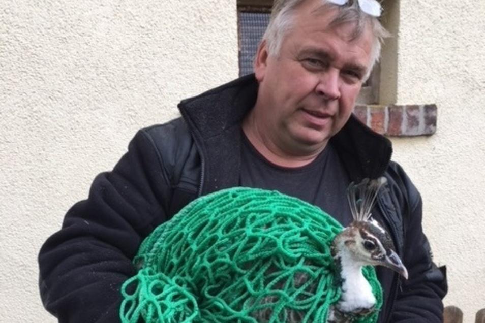 Helmut Schumann vom Bauhof der Stadt Roßwein bringt den Pfau ins Tierheim Ostrau.
