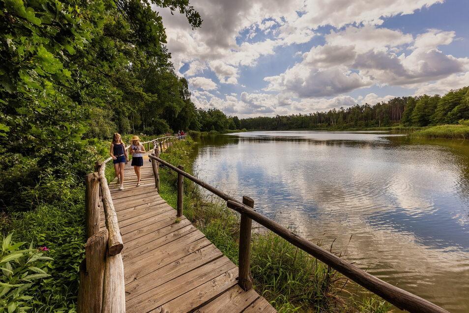Der See der Freundschaft liegt direkt am Biberpfad in der Königsbrücker Heide.