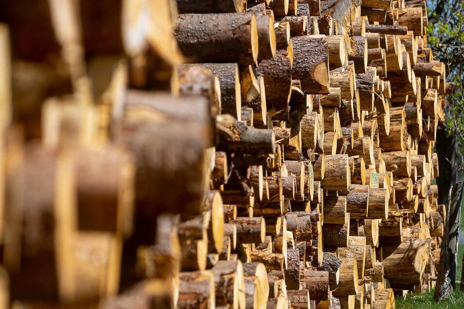 Holz machen: Im Weißiger Wald bei Freital werden ab Anfang Oktober Bäume gefällt. Aus Sicherheitsgründen werden deshalb Wege gesperrt.