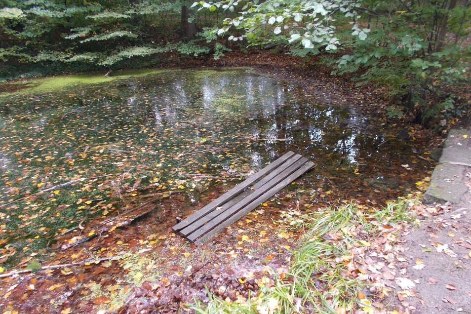 Unbekannte haben eine Bank in den Teich im Schlosspark von Graupa geworfen.