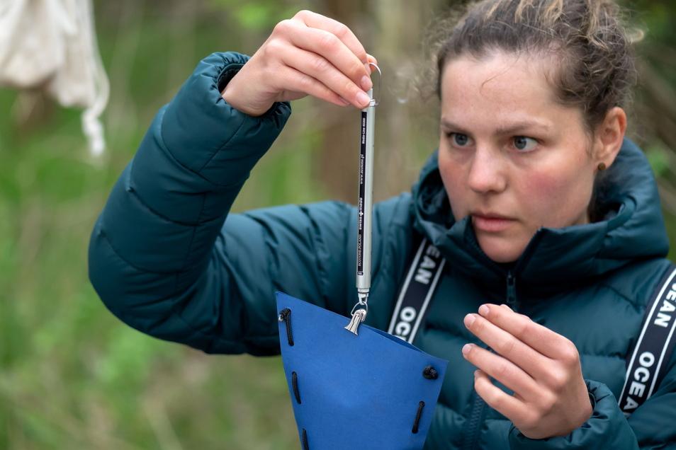 Mit einer Federwaage wiegt Sabine Urban ihren federleichten Fang. Danach geht es für das Tier wieder in die Freiheit.