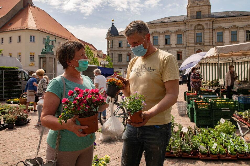 An diesem sonnigen Dienstag brummt das Geschäft auf dem Großenhainer Markt: Jens Schöner von der gleichnamigen Glaubitzer Gärtnerei berät Angela Hoppe, die Blumen für den Garten kauft.